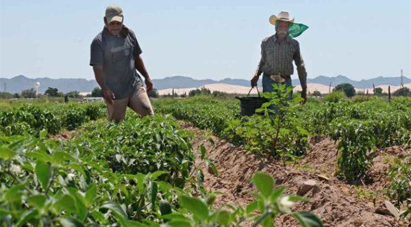 licença-agricultor-documentos-600x332 2019