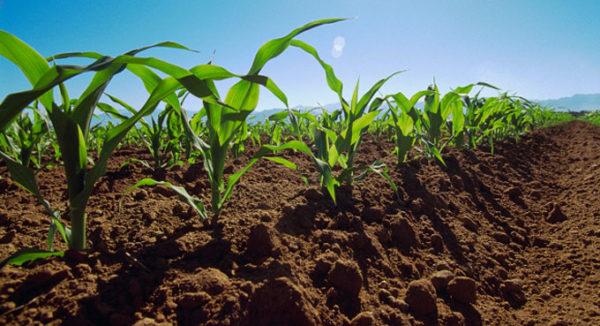 licença-agricultor-emissão-600x326 2019