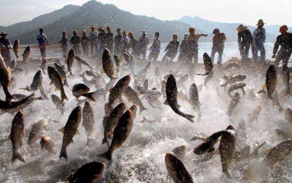 licença-de-pescador-solicitação-600x375